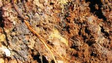 pylevato-glinistyj grunt